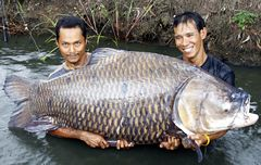 Biggest carp ever was caught