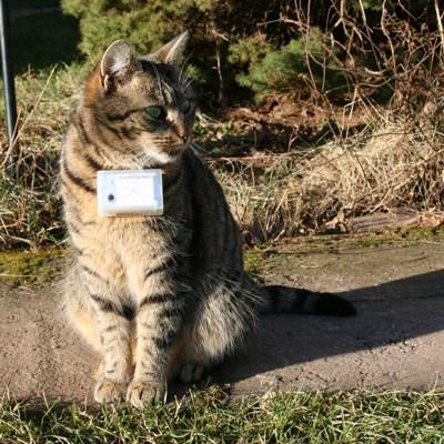 Fritz - photographer cat