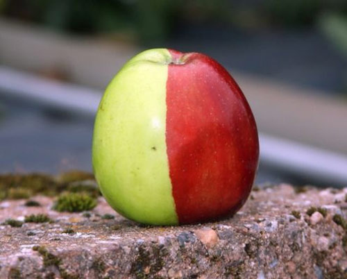 half green half red apple