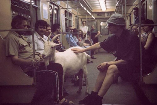 Real goat in Moscow Metro car