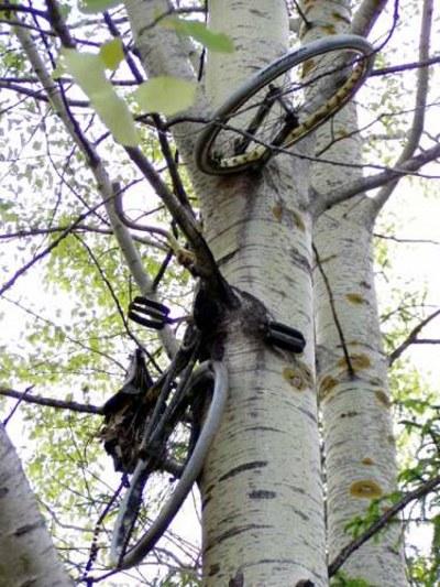 Bike in a tree in Finland