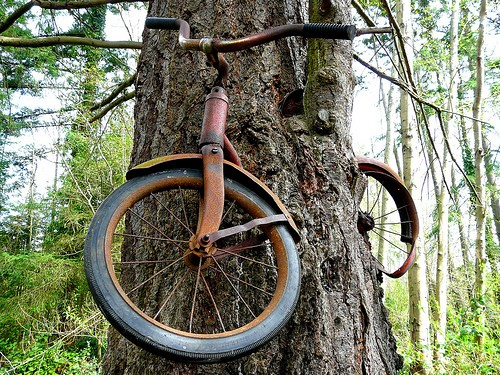 Vashon Island bike in a tree