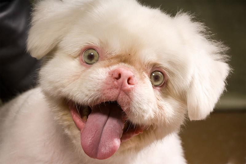 Albino dogs