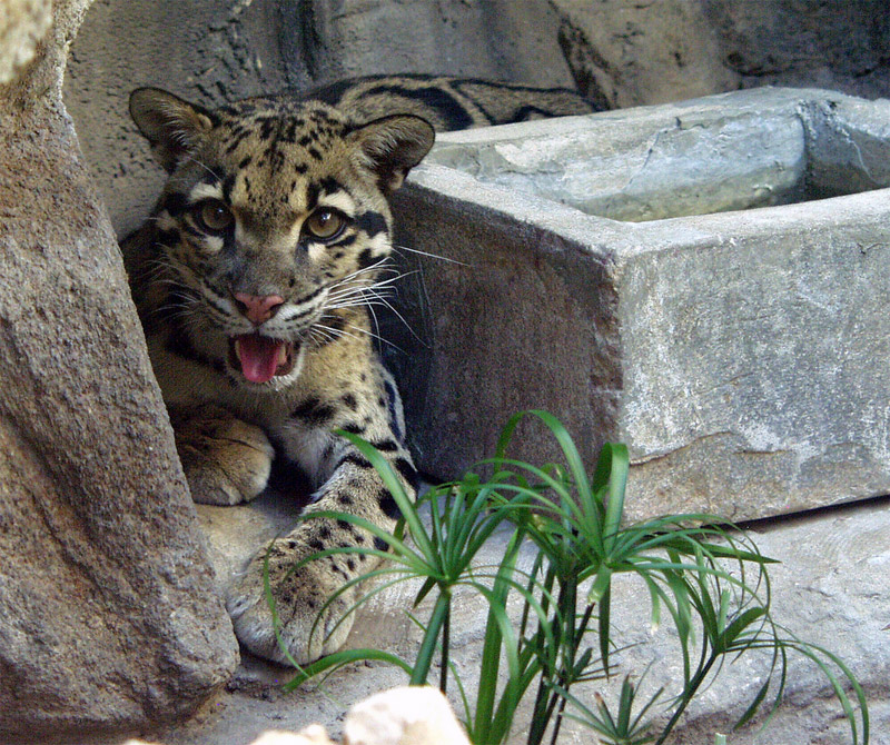 11. Baby leopard in the San Antonio Zoo. Photo by Kelly Deluded