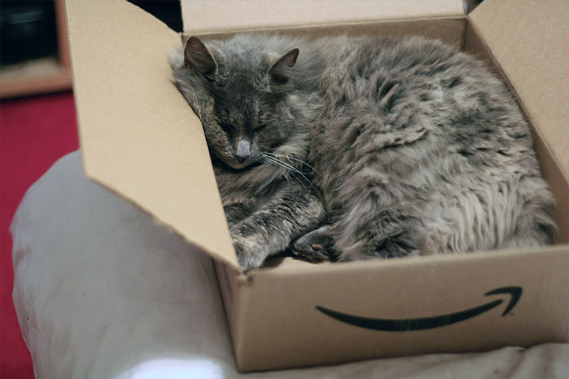 6. Cat is sleeping in the Amazon box. Photo by Julie