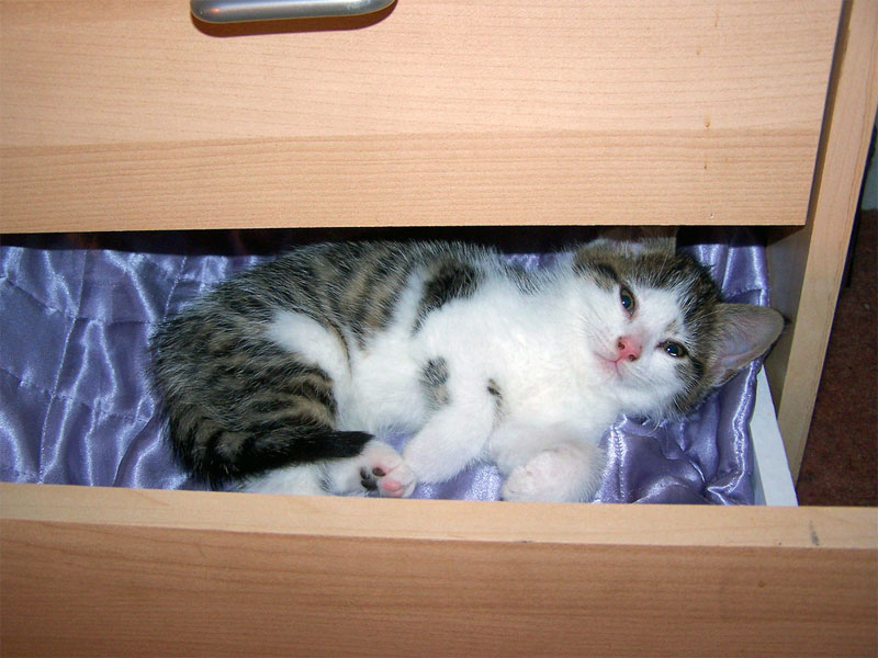 8. Cat is sleeping in the drawer. Photo by Rachel H
