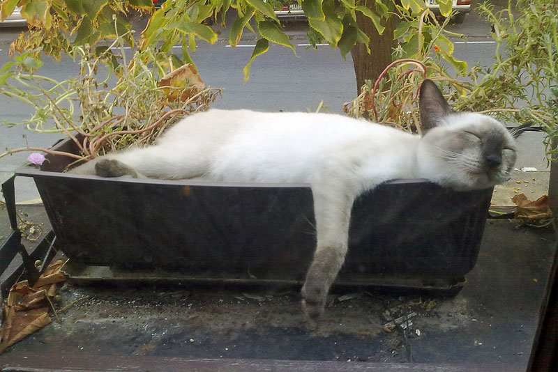 4. Cat is sleeping in the pillaged flower pot. Photo by Evelyn Moonshine