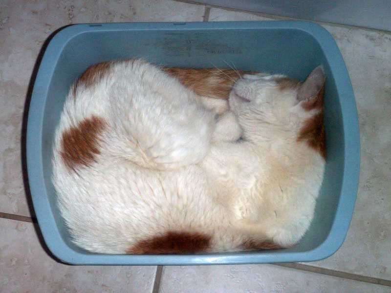 3. Cat is  sleeping in a shallow bucket