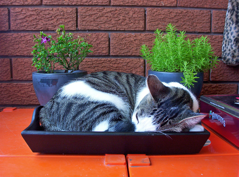 1. Cat is sleeping in a tray. Photo by Brian Costelloe