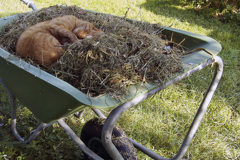 2. Cat is sleeping in a wheelbarrow full of grass. Photo by mr moor