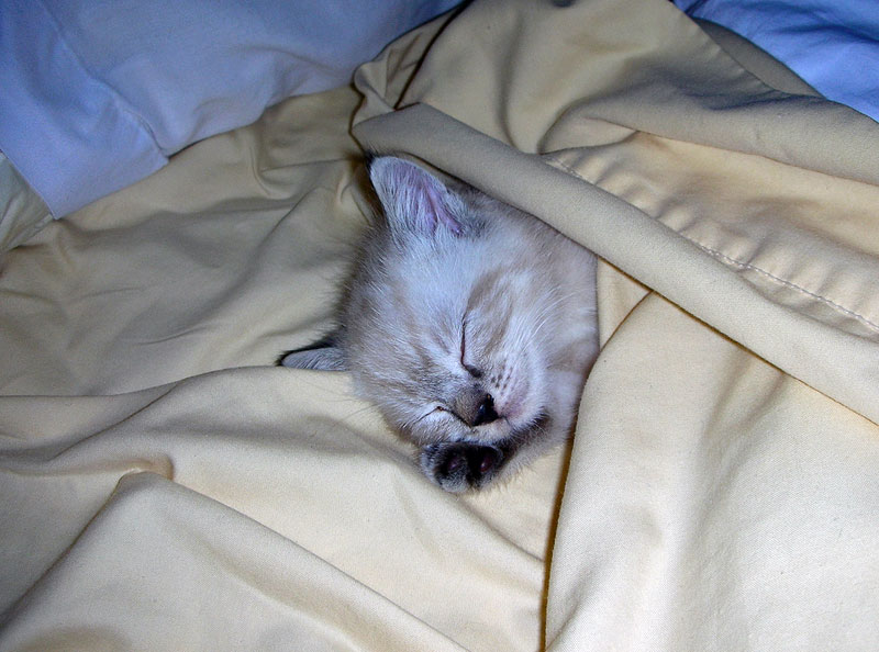 10. Cat is sleeping in the linens. Photo by B. DeFlorio