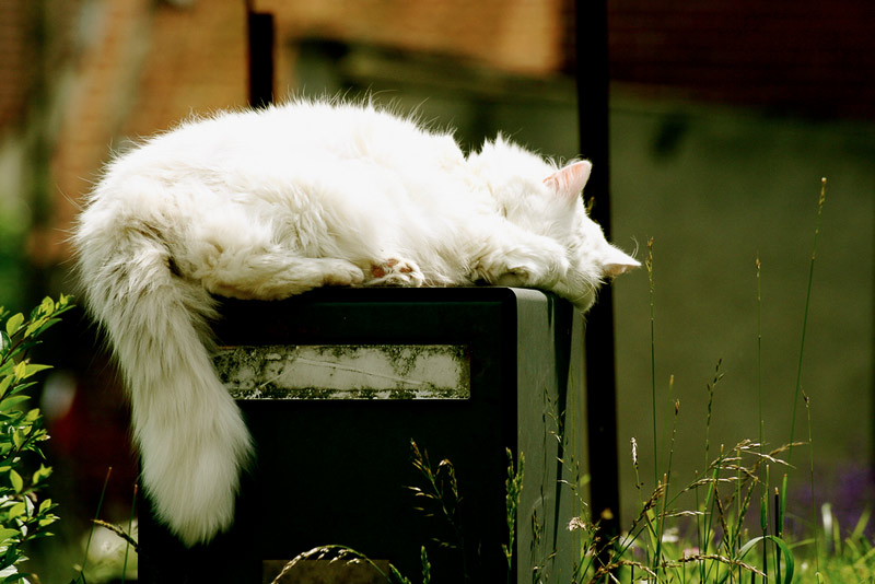 7. Cat is sleeping on top of the mailbox. Photo by Mira Parent