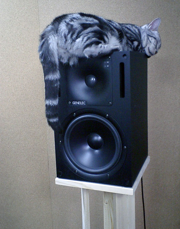 9. Cat is sleeping on top of the speaker. Photo by Yasuhiro