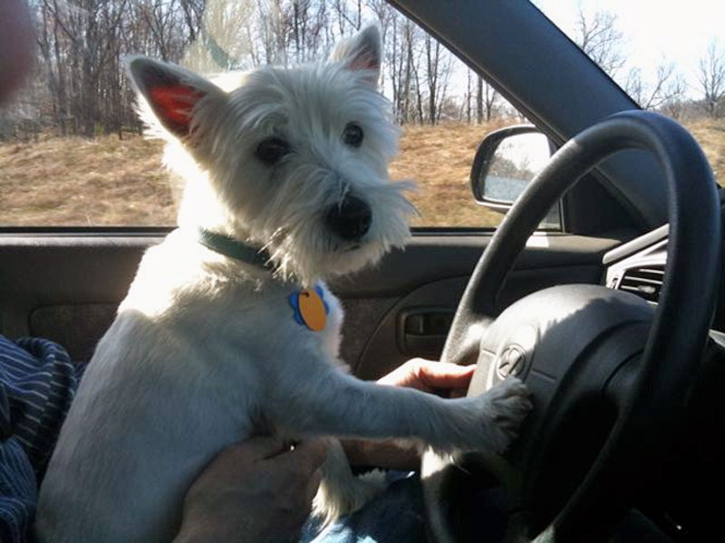 12. Dog's driving. Photo by Elisha Marshall