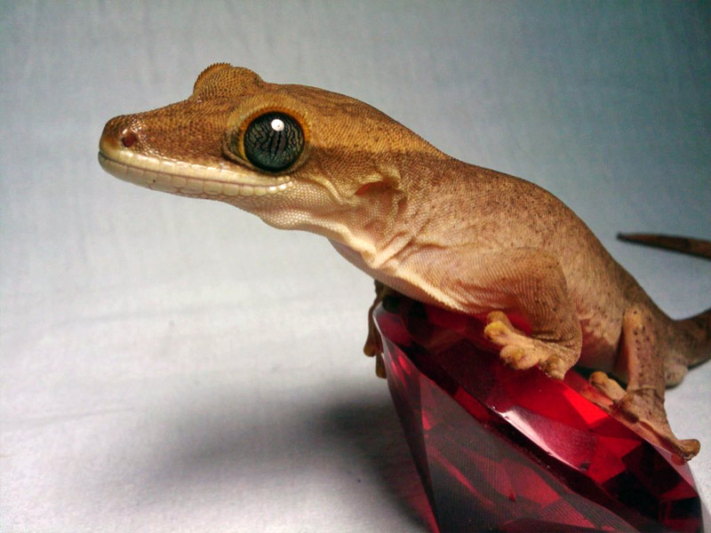 15. Cute gecko hanging on a glass gem