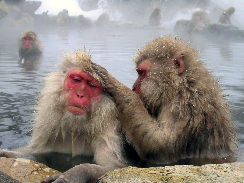 7. Grooming macaques. Photo by Matt Webster](grooming-macaques.jpg