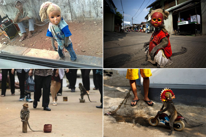 Masked monkeys on the streets of Indonesia