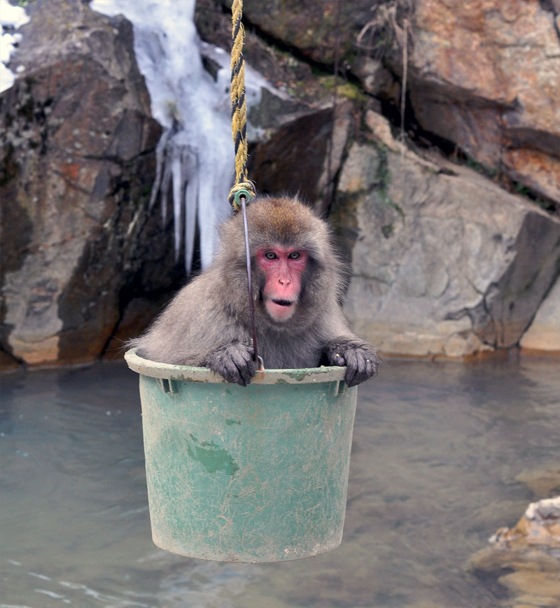 13. Snow macaque in the bucket. Photo by Anjuli Ayer, Eyes Wide Photo