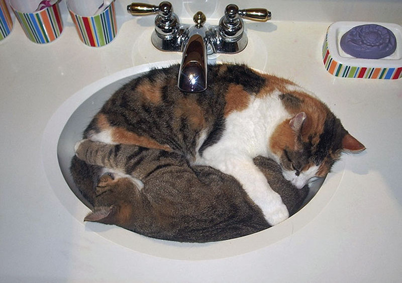 5. Two cats are sleeping yin and yang in a sink