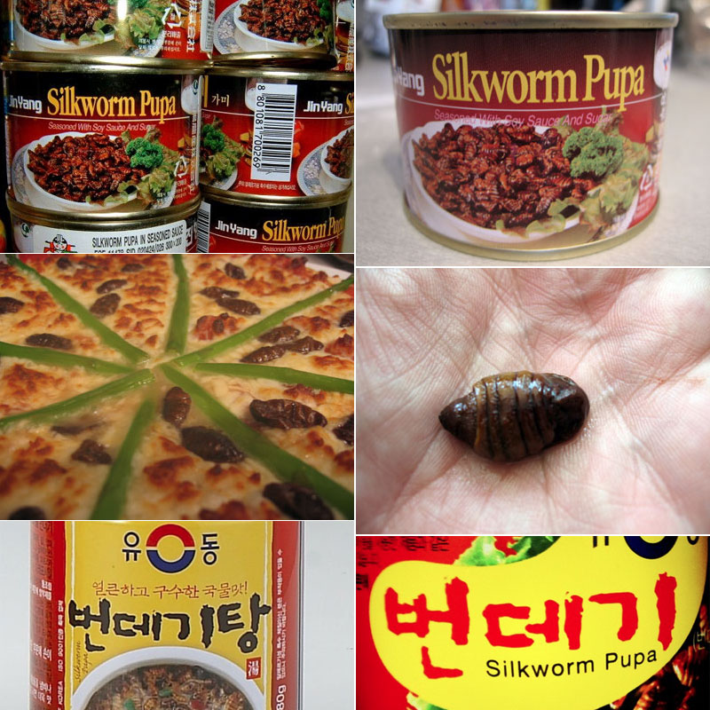 6. Canned silkworm have a lot of uses in Korea