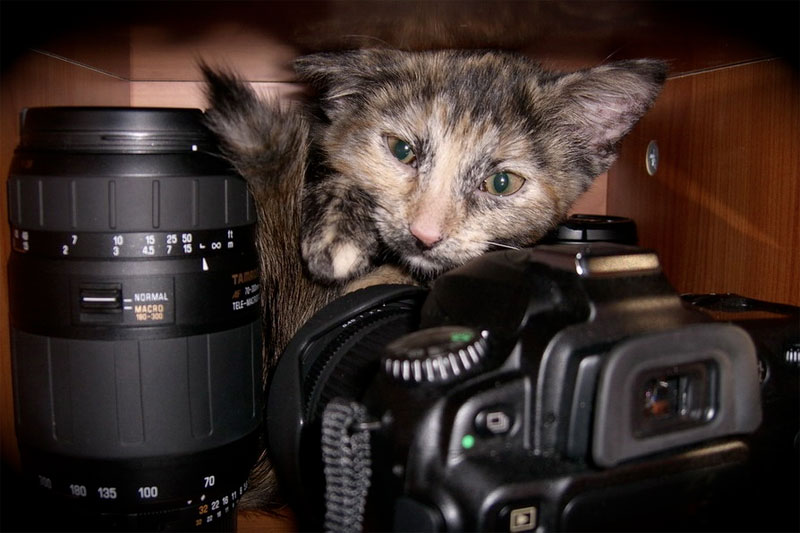 7. Cat is packing its photo equipment