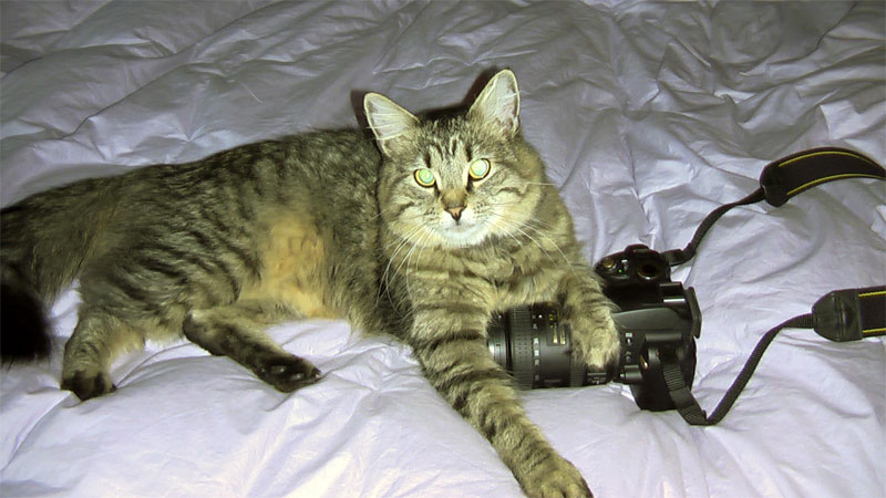 8. Cat is posing with its camera