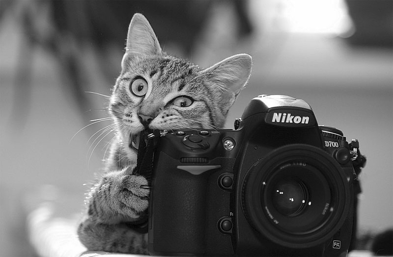 1. Cat with camera