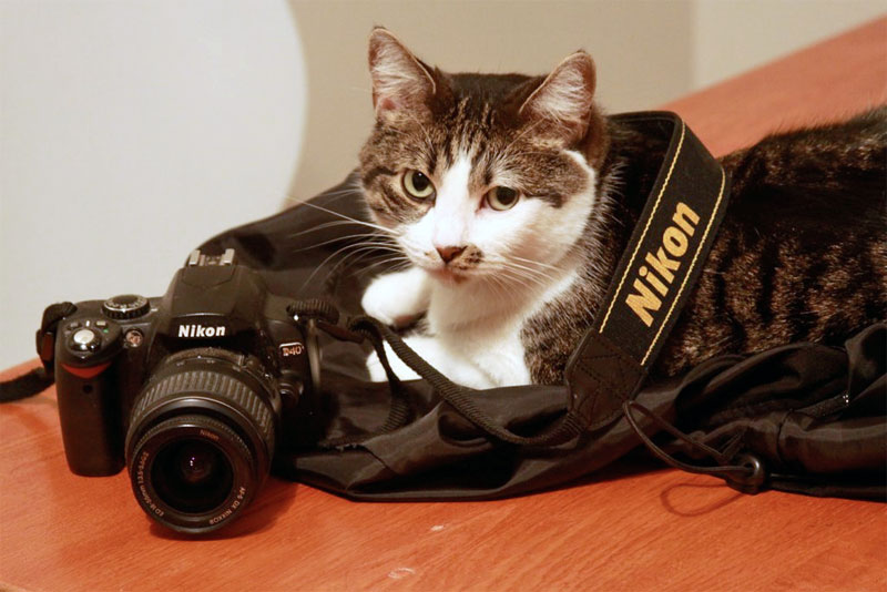 2. More and more cats around the globe prefer Nikon