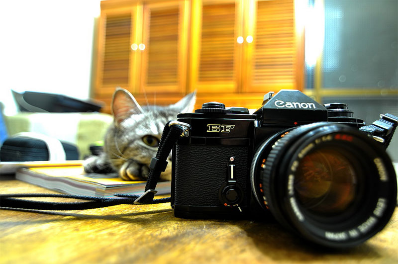 9. Cat is still using its old Canon film camera