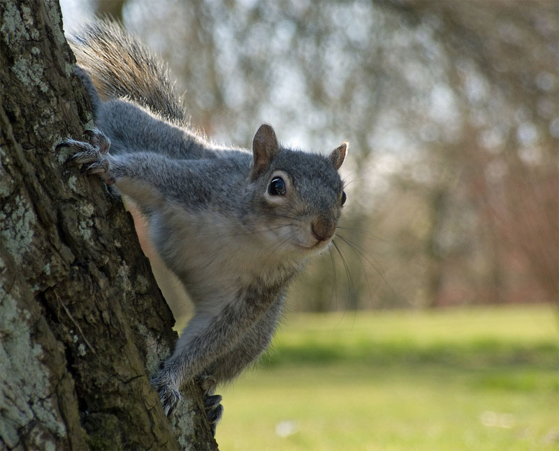 16. Curious squirrel. Photo by Tim Fields