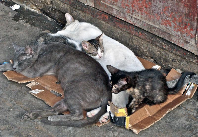 Destruction of cats. Photo by Julia Manzerova