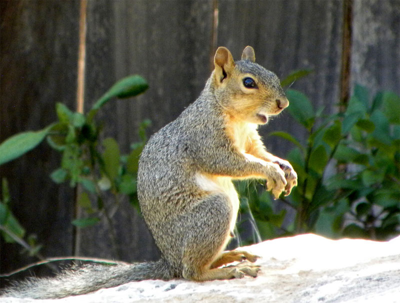 17. Posing squirrel