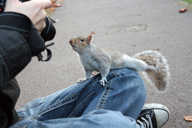 14. Squirrel posing on camera