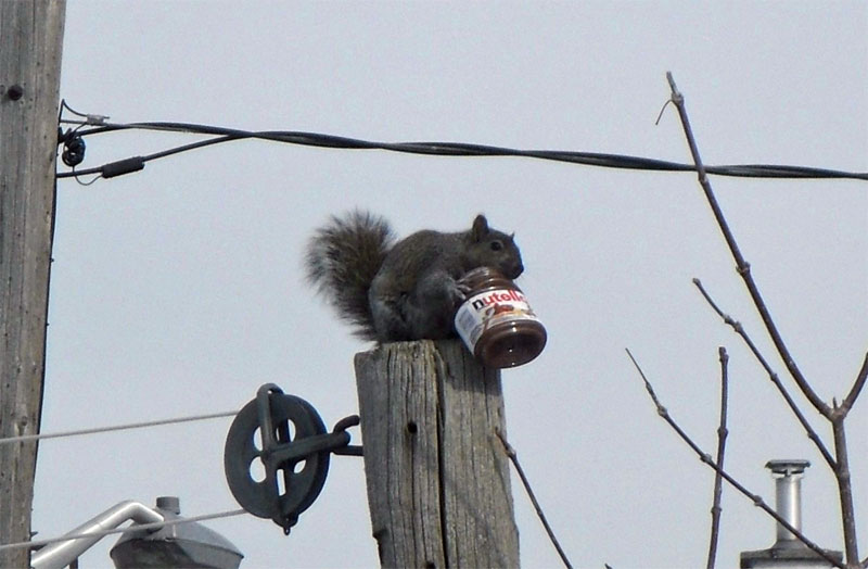 11. Squirrel snatched the whole jar of Nutella somewhere