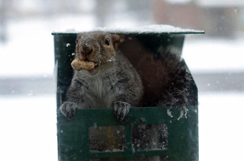 8. Squirrel stealing a peanut