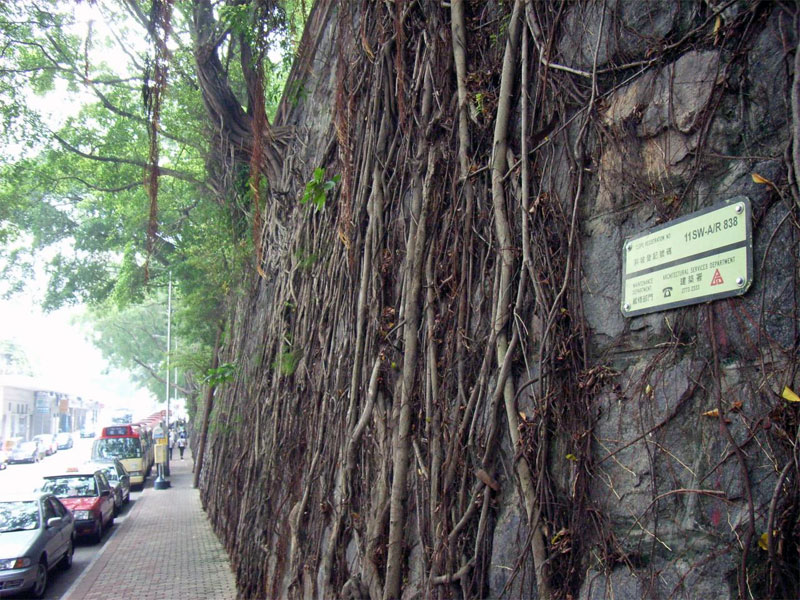 5. Stonewall covered with banyan roots