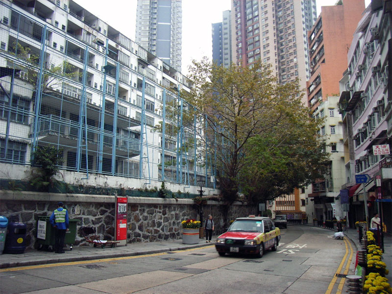 6. Banyan trees in the residential area of Hong Kong