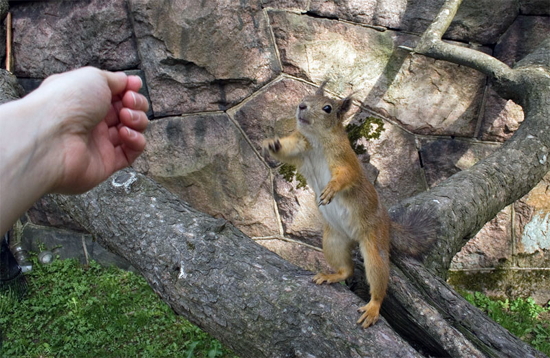 12. Stretching squirrel. Photo by Tomi Tapio