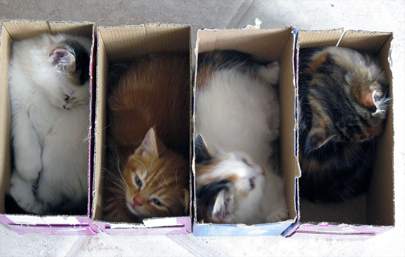 Kittens playing with boxes