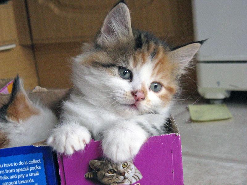 3. Kitten in the box