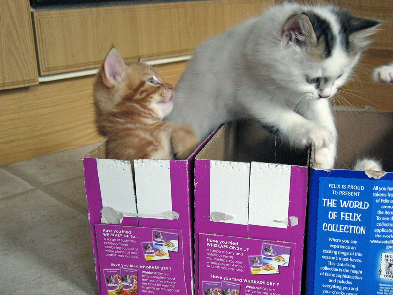 2. Kitten jumps out of the box