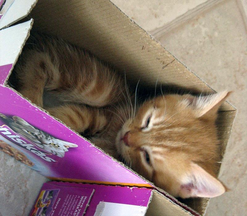 4. Kitten naps in the box
