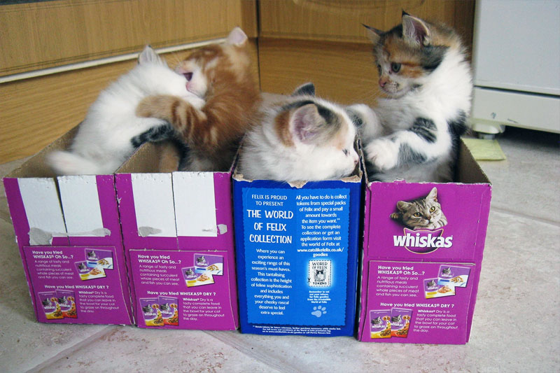 5. Kittens fight in the boxes