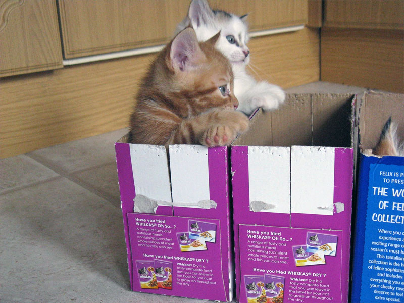 1. Kittens in the box