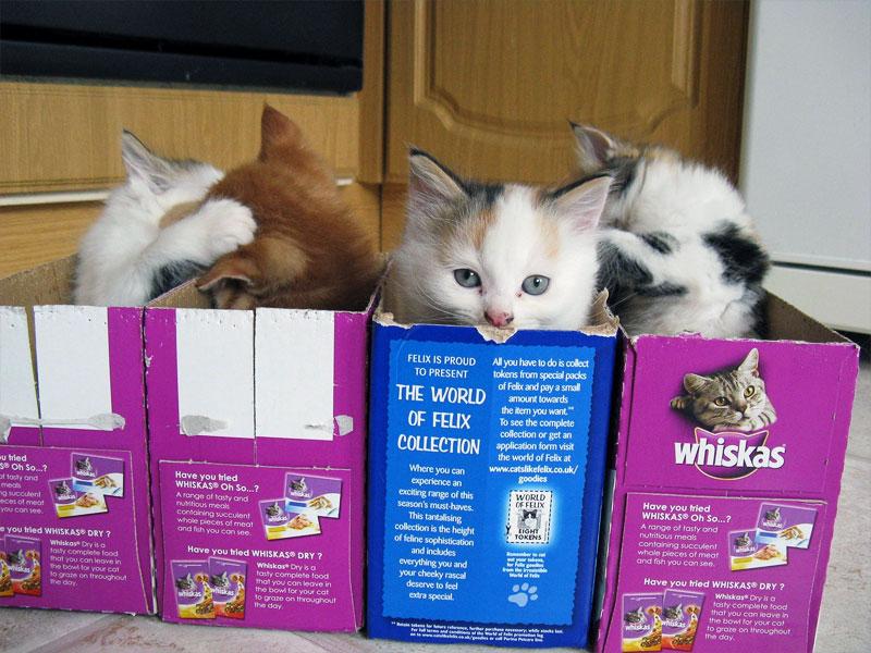 6. One box per kitten