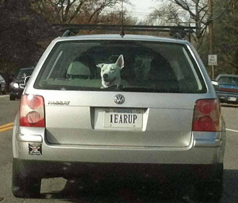 9. Dogs person license plate