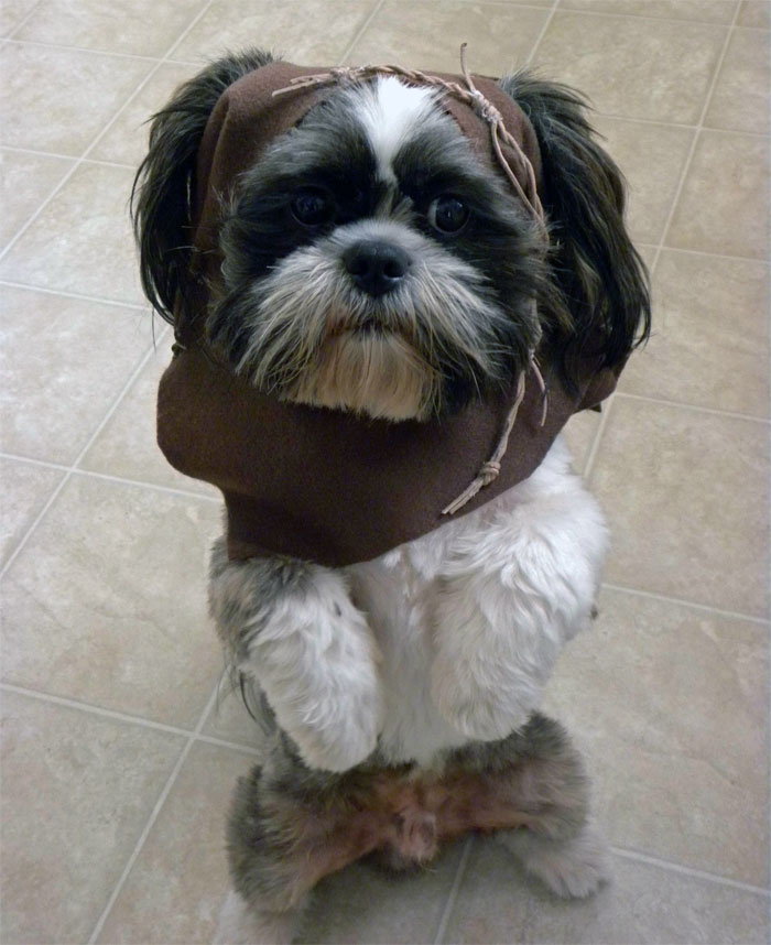 9. Little Chewbacca