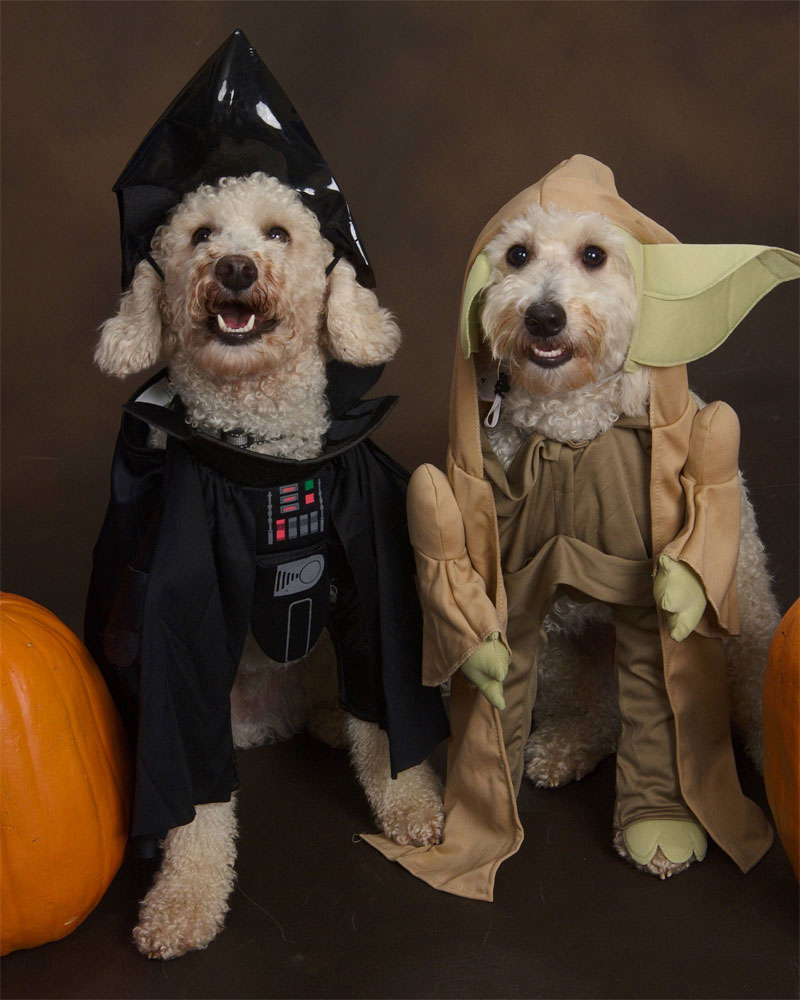 6. Darth Vader and Yoda dogs