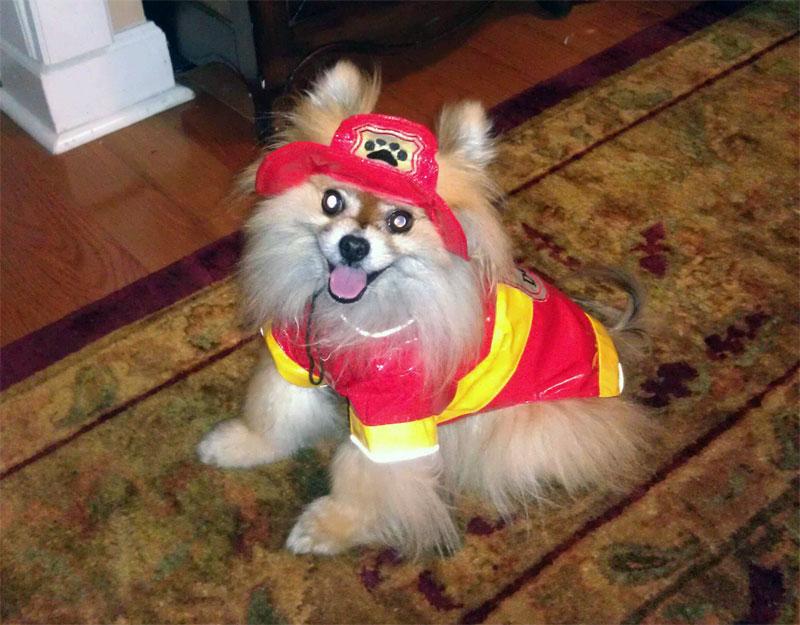 7. First responder dog