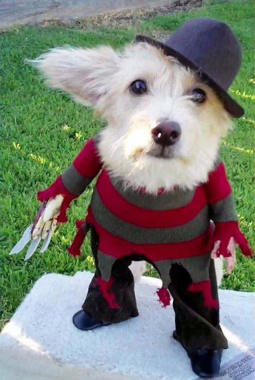 4. Freddy Krueger dog